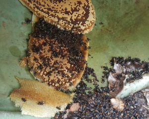 bee control in Singapore