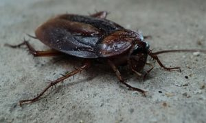 The Deadly Diseases Carried By Cockroaches