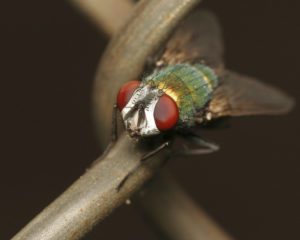 Fly Control Services For Flying Insects
