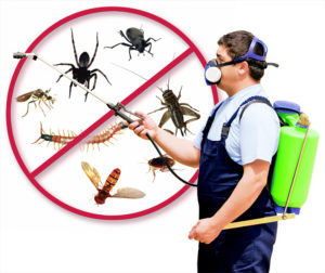 Mosquito Control Singapore