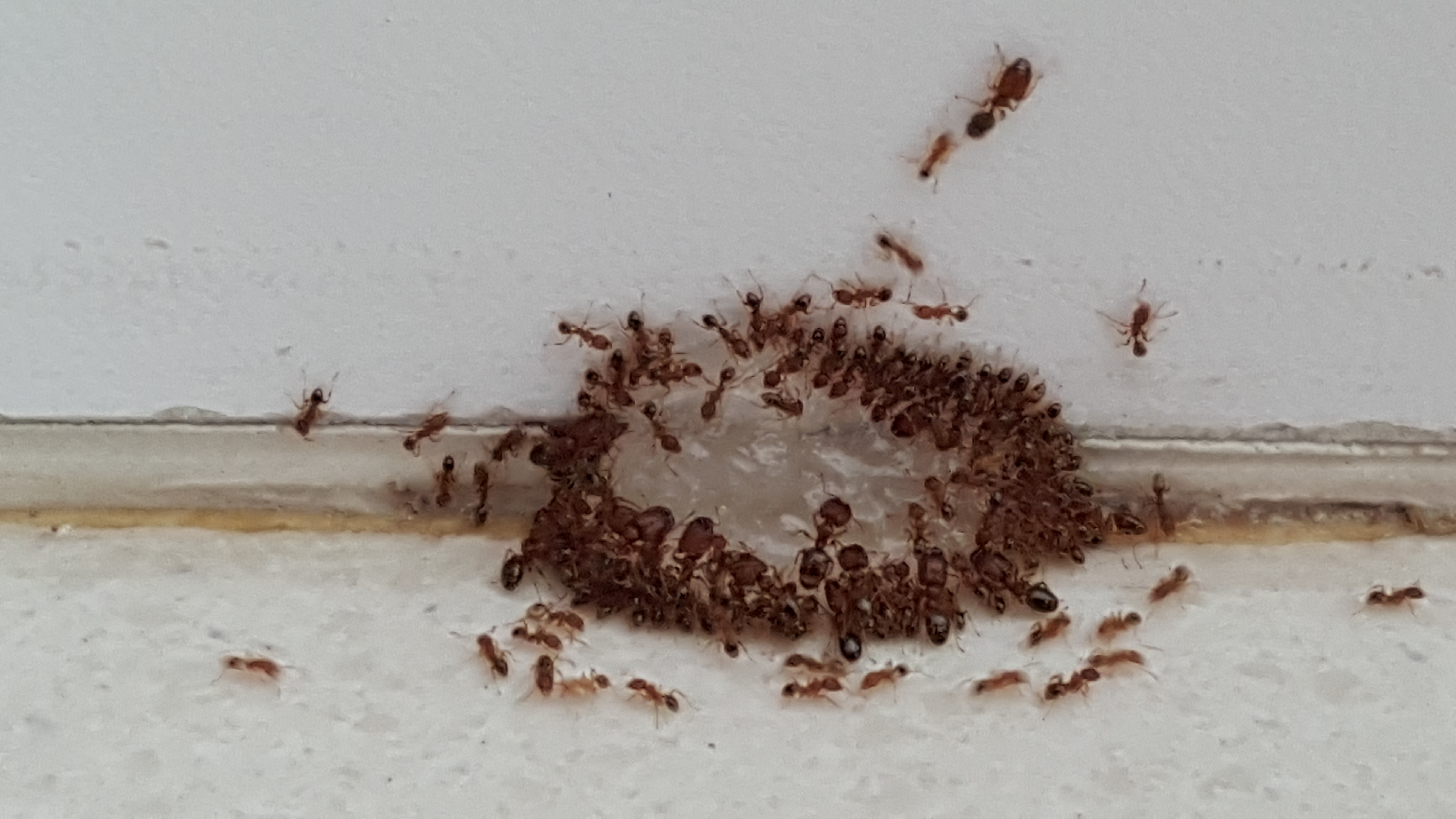 Ants Control Singapore How To Get Rid Of Ants