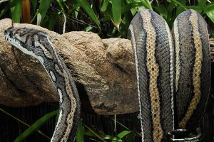 Snake Control Services Singapore