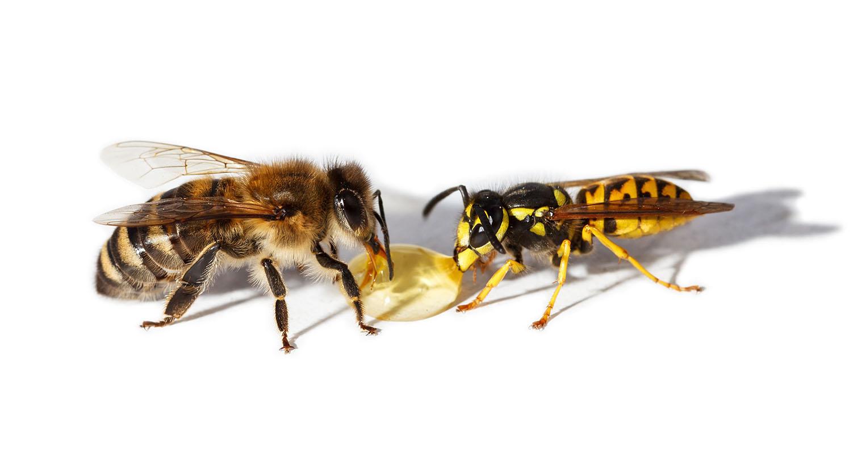 bee control Singapore
