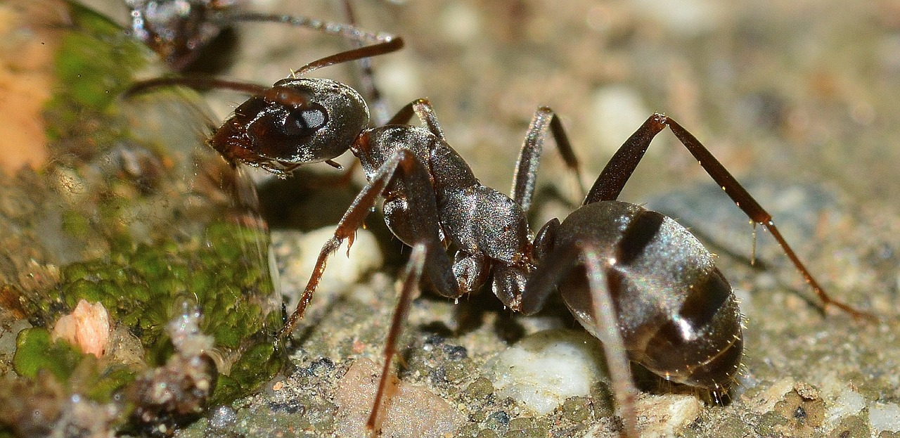 ant control and prevention