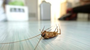 Identify Pests In Your Home