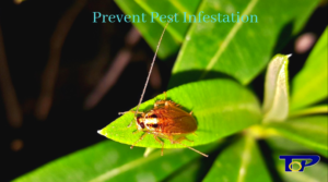 Prevent Pest Infestation